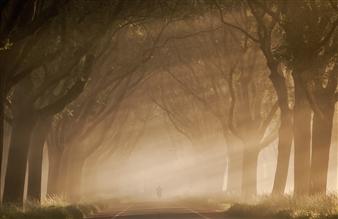 Jeffrey Groeneweg - The Fog Photographic Print on Aluminium Dibond, Photography
