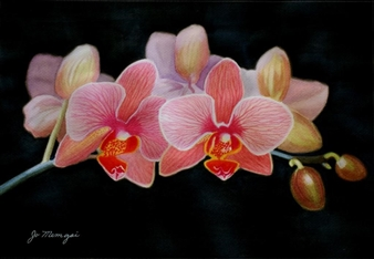 Josie Mengai - Orchids Digital Print on Aluminum, Prints