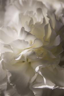 Kathleen Messmer - Enlightened Photograph on Aluminum, Photography