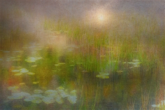 Linda Harding - Lillypads Photograph on Fine Art Paper, Digital Art
