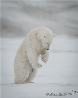 Ellen Cuylaerts - Tai Chi Bear Photographic Print on Aluminum, Photography