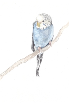 Charmaine Nadine Osaerang - Cookie - Budgie Watercolor on Paper, Paintings
