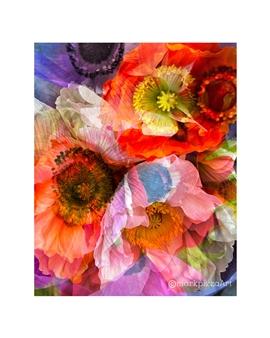 markpizzaArt - Poppy Explosion Digital Print on Hahnemuhle Cotton Paper, Prints