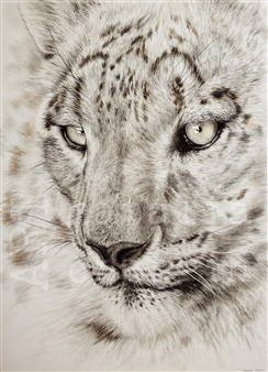 Natalia Chaplin - Snow Leopard Chalk and Graphite on Paper, Drawings