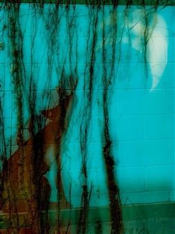 Evan William Plunkett - A Wall Howl Archival Pigment Print, Photography