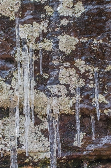 Lliam Greguez - Lichen Dribble Brown Green Metal Sublimated Print, Photography