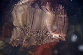 Alberto Blanquel - Second Nature Photograph on Plexiglass, Photography