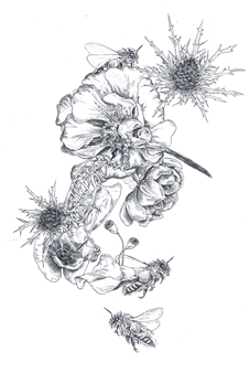 Stephanie E. Graham - Hummingbird Floral Pen on Paper, Drawings