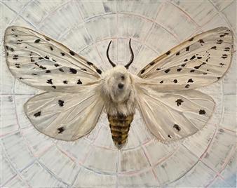 John Britton - Moth Oil on Canvas, Paintings