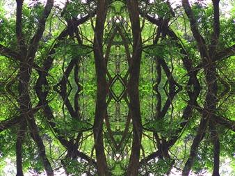 Stacey Dolen - Through the Trees Digital Print on Aluminum, Digital Art