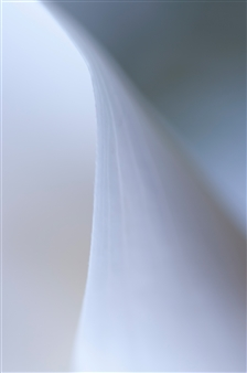 Kathleen Messmer - Flowing Photograph on Aluminum, Photography
