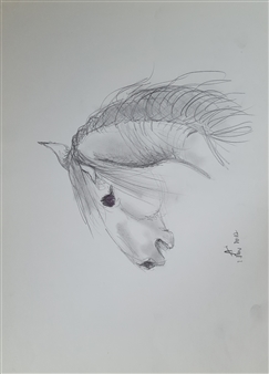 Anna Weichert - Calling Stallion Pencil on Paper, Drawings