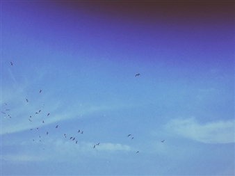 Steven Anggrek - Birds In the Sky Photograph on Fine Art Paper, Photography