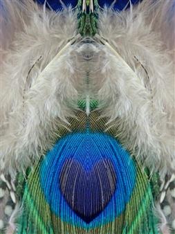 Lorella - Loving Peacock Photographic Print on Metal, Photography