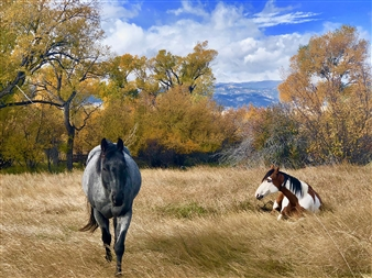 Chace Gray - Chief's Horse Archival Pigment Print, Photography