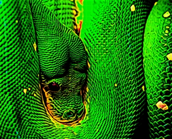 Howard Harris - Snake Digital Print on Aluminum, Digital Art