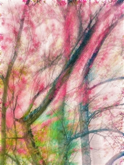 Evan William Plunkett - Flower Branch Archival Pigment Print, Photography