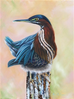 Pamela Sullivan - Green Heron Oil on Canvas, Paintings