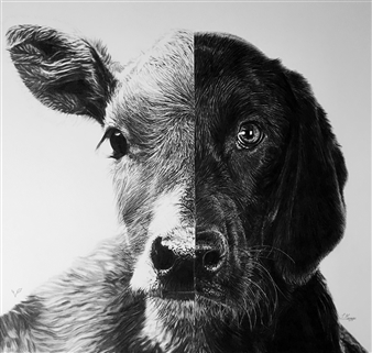 Samantha Messias - Speciesism Charcoal & Pencil on Paper, Drawings
