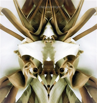 Vaydra Wright - Original Bug Series Digital Art on Paper Mounted on Aluminum Board, Digital Art