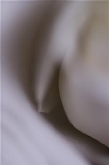 Kathleen Messmer - Spooning Photograph on Aluminum, Photography