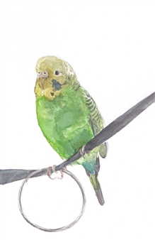 Charmaine Nadine Osaerang - Pocky - Budgie Watercolor on Paper, Paintings