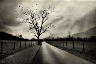 Linda Harding - The Road Less Traveled Photograph on Fine Art Paper, Photography