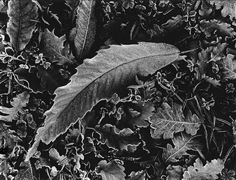 Antonio Biagiotti - Dry Leaves Photographic Print on Board, Photography