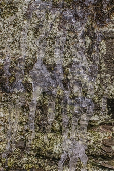 Lliam Greguez - Lichen Dribble Green Brown Metal Sublimated Print, Photography