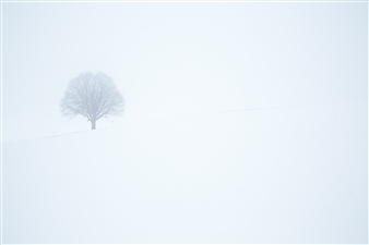 Paul Christener - Winter Wonderland Photograph on Hahnemühle Paper, Photography