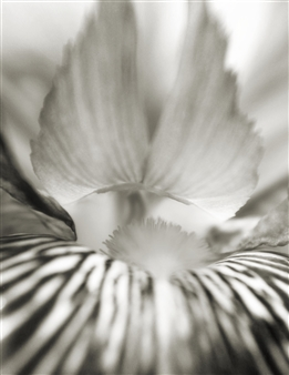 Chet B. Simpson - Angel Of Iris Black & White Digital Photography on Hahnemuhle Cotton Paper, Photography