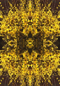 Stacey Dolen - Forsythia Digital Print on Aluminum, Digital Art