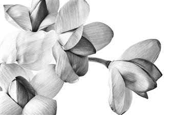 Gianluca Pollini - Lotus Flower #3 Photograph on Fine Art Paper, Photography