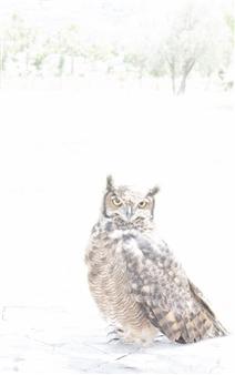 María Alejandra Ibáñez - Owl Archival Pigment Print on Hahnemühle Paper, Photography