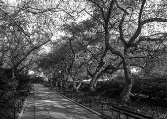 Carolyn Rogers - Tree Lineup Platinum/Palladium Photograph, Photography