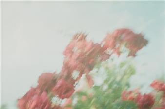 Takuya Yamamoto - Negative Film 17 Print on Photographic Paper, Photography