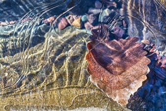 Lliam Greguez - Leaf Ripples Stone Photograph on Fine Art Paper, Photography