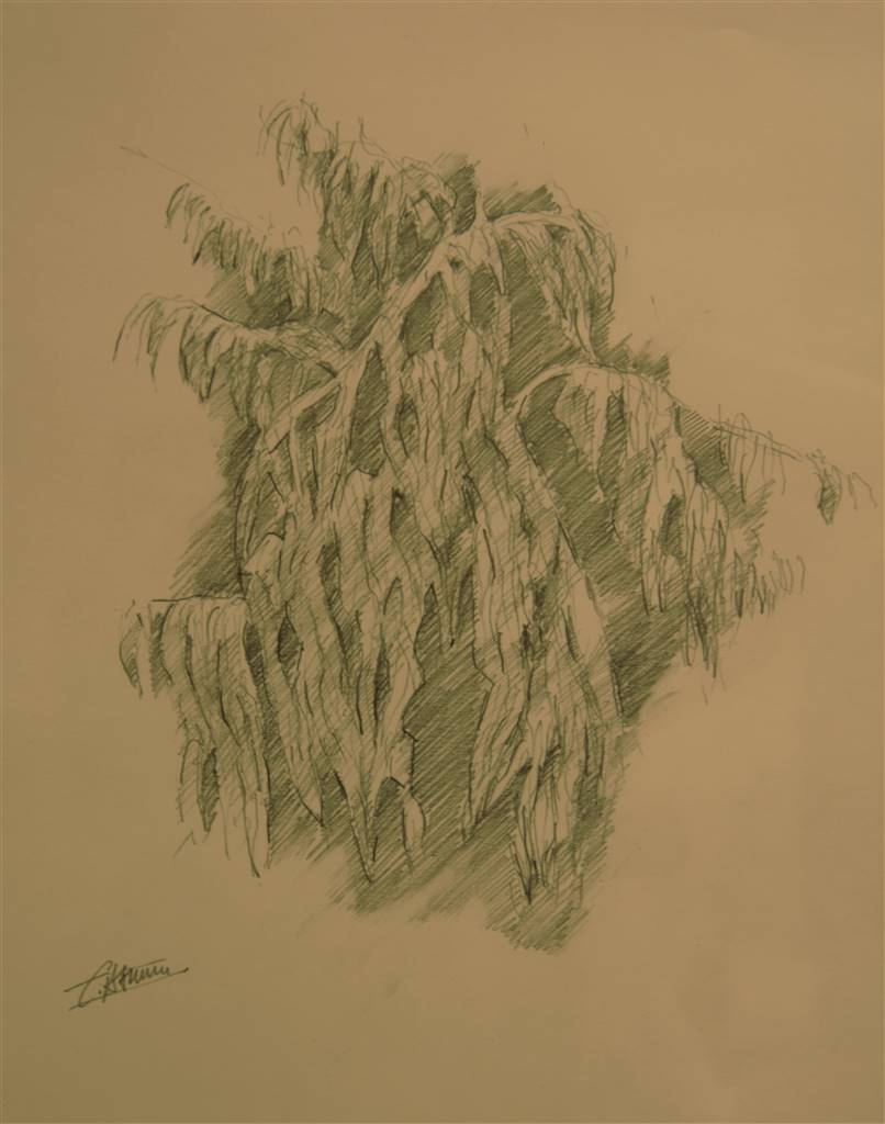 Caspar baum sketch for tropical 2 polychrome pencil drawings