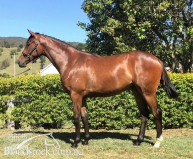 Magic Millions Yearling Sale Lot 431
