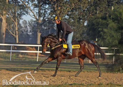 Written Tycoon filly in slow work June 19