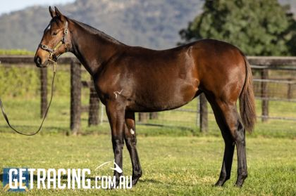 Very athletic filly with great hindquarter!!!