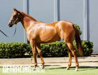 Outstanding looking filly with a good pedigree!!!