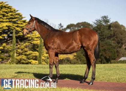 Strong filly with great hindquarter!!!