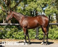 Exosphere x Mussenden Filly Conformation