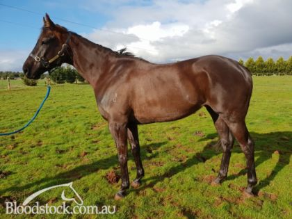 Thoroughbred horses for sale, Stallion Profiles, Racehorse