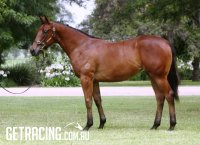 Strong athletic filly with a great shoulder - great value!!!