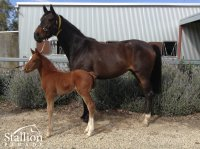 Jimmy Creed x Echo Princess filly (2017) (Spendthrift Australia)