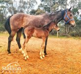 Warrior's Reward x Nina Bay colt (2017) (Spendthrift Australia)