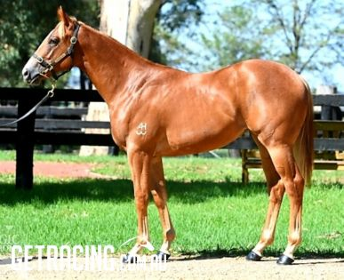 Lot 373 - 2019 Magic Millions Yearling Sale