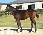 Strong athletic filly with great hindquarter, 2yo type!!!